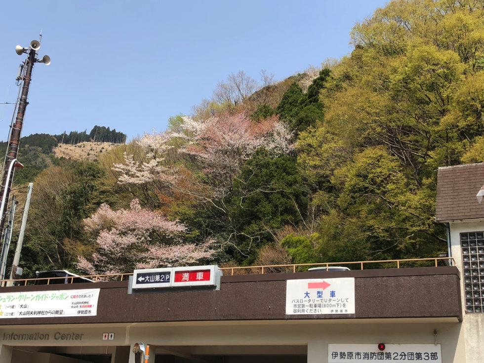 大山阿夫利神社 駐車場 桜