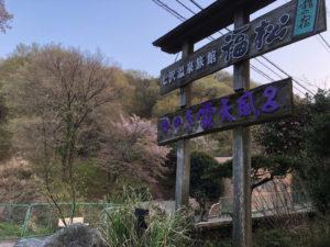 温泉 桜 看板
