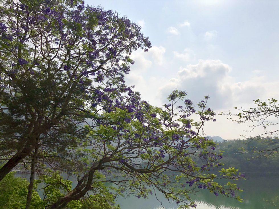 紫の花 湖 自然