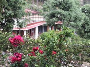 バラ 庭 ホテル
