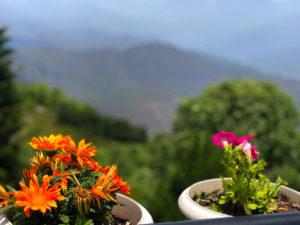 花 テラス 鉢植え