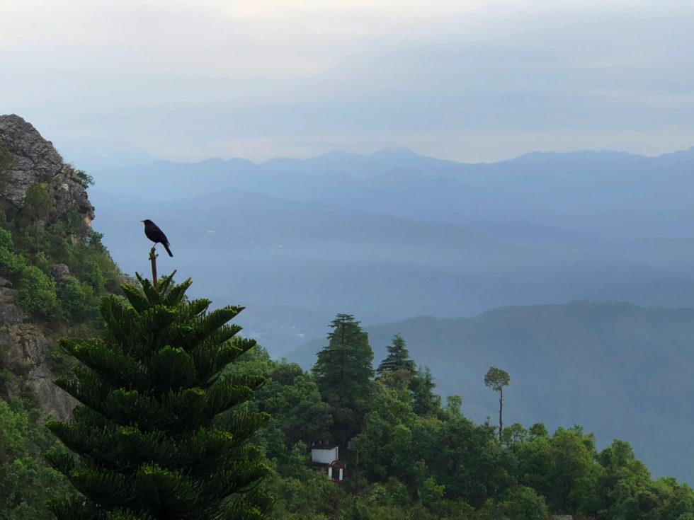 鳥 山 トラ