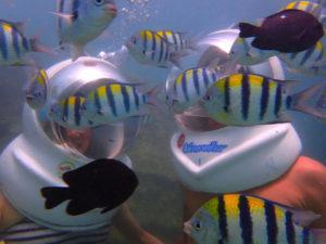 ダイビング 熱帯魚 海の中