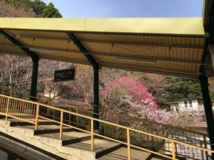 桜 ホーム 駅