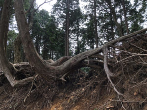 木 根 パワー