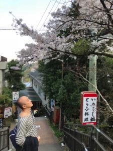 イノシシ鍋 豆腐 参道